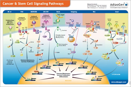 Cancer & Stem Cell Signaling Wallchart 2013