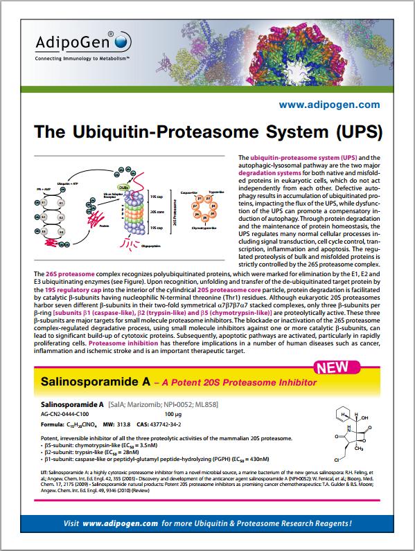 Proteasome Flyer