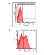 Detection of endogenous human LAG-3 by FACS analysis using anti-LAG-3 (human), mAb (17B4) (ATTO 647) (Prod. No. AG-20B-0012TS). Human PBMC were stimulated (B) or not (A) with 1μg/ml of superantigen SEB. After 2 days PBMC were stained with 10μg