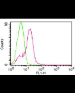 anti-ACE2 (human), mAb (AC18F) (ATTO 488)