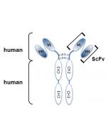 anti-HMGB1, mAb (rec.) (Giby-1-4) (Biotin)