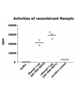 Measurement of NAMPT enzymatic activity was performed as described previously [G.C. Elliott, et al.; Anal Biochem 107, 199 (1980)]. The recombinant Nampt was diluted in assay buffer and 10μl per 50μl reaction mix were applied in the reaction mix (20