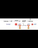 Transcreener® ADP2 TR-FRET Assay