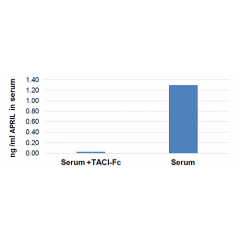 Figure: Specific quantitation of APRIL in human serum. Method: Serum from a healthy patient is left untreated or treated with 1µg/ml of the APRIL receptor, TACI (human):Fc (human) (Prod. No. AG-40B-0079). APRIL levels were measured us