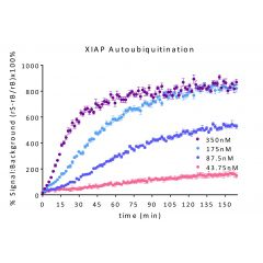 % Signal to Background of Continuous Real-Time TR-FRET NEDD4 titration (autoubiquitination): Serial dilutions of NEDD4 from 50nM to 3.125nM mixed with UBA1, UBE2L3, and, TRF-Ub mix. Reaction was initiated with addition of Mg-ATP.