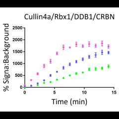 Cullin4a/Rbx1/DDB1/CRBN E3 Ligase Complex TR-FRET Kit