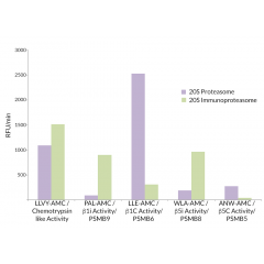 20S Immunoproteasome vs. 20S Constitutive Proteasome Activity: 20S Proteasome is most active against Suc-LLVY-AMC (SBB-PS0010), Z-LLE-AMC (SBB-PS0006), and Ac-WLA-AMC (SBB-PS0008) substrates, representing physiologically relevant chymotry