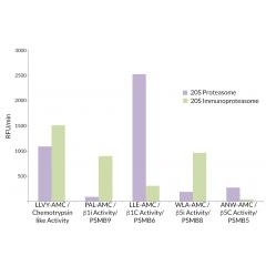 20S Proteasome (rat) (untagged)