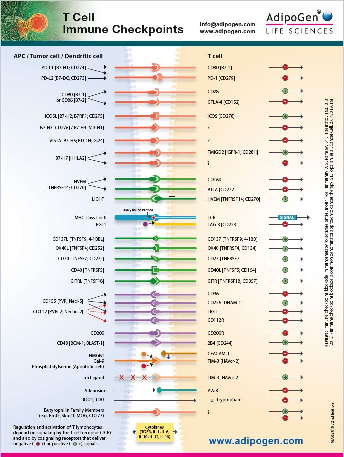 T Cell Immune Checkpoint Wallchart - 2nd Edition