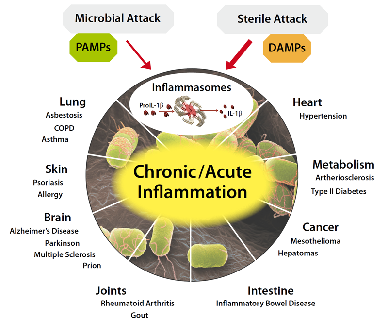 Inflammasomes - Therapeutic Implications