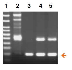 BioStab PCR Optimizer