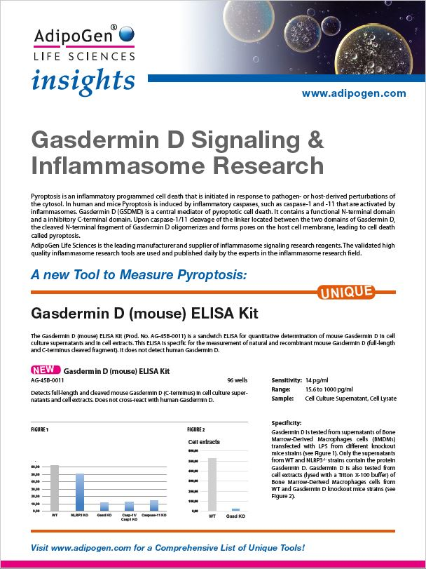 Gasdermin Insights 2019
