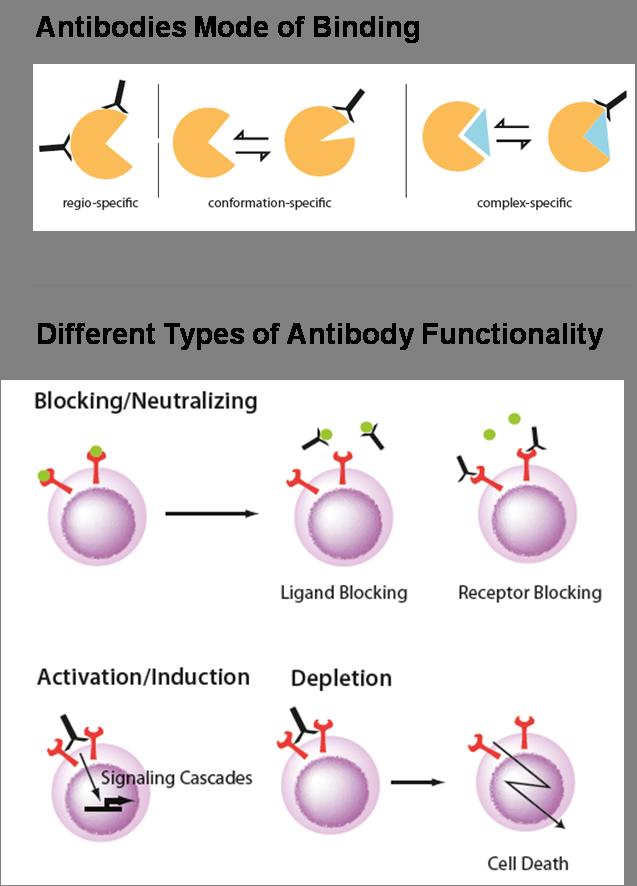 Binding and Functionality