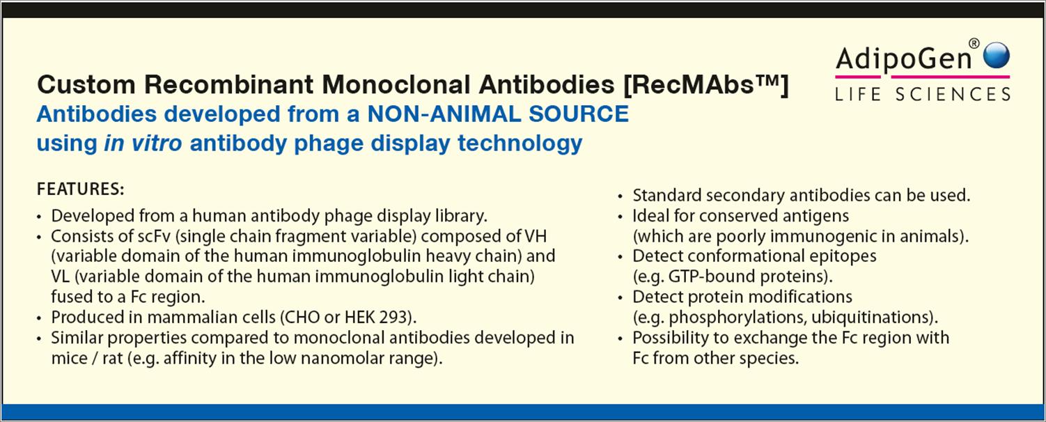 Custom Recombinant Antibodies