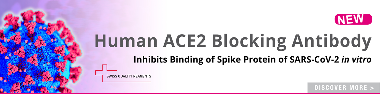 ACE2 Blocking Antibody