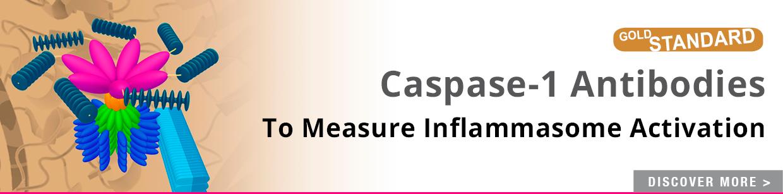 Caspase-1 p20 mAb (Casper-1)