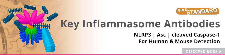 Key Inflammasome Antibodies