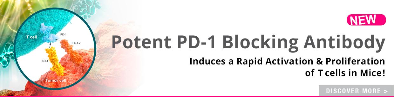 mPD-1 Blocking Antibody