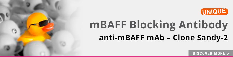 mBaff Blocking mAb (Sandy-2)