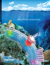 Receptor Signaling