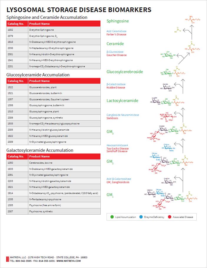 Lysosomal Storage Disease Product Flyer
