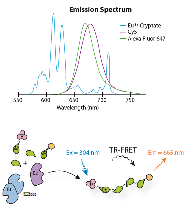 Europium-Cryptate labeled Ubiquitin